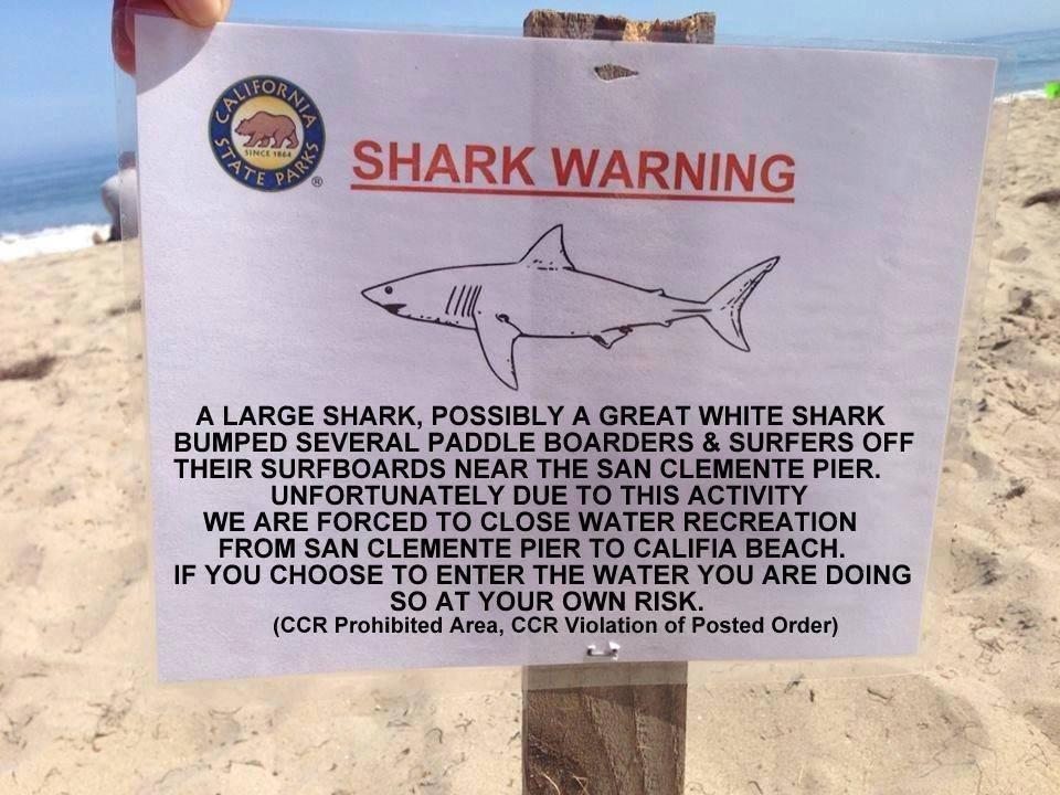 SharkSign1.jpg
