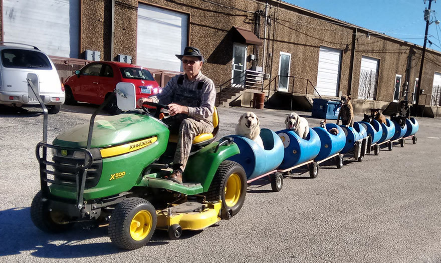 rescued-dog-train-tractor-stray-eugene-b