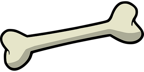 bone-157272__340.png