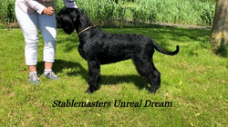 Stablemasters Unreal Dream