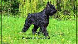 Porosus De Pomerland