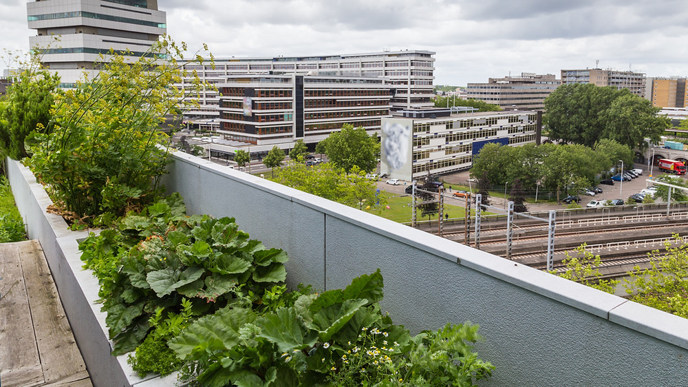 Flachdächer können grüne Oasen in der Stadt werden