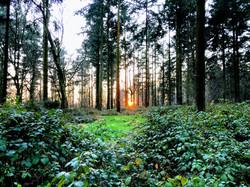 Groveley Woods