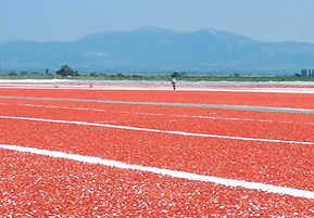 paradiso tomato products - sun dried tomatoes