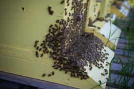 Buzzzzz - Bees
