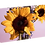 Thumbnail: Flowers of the Sky