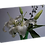Thumbnail: Violet White and Green