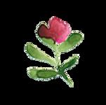 kleine miniblume.png