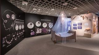 »Das Gehirn« - Ausstellung LWL-Museum für Naturkunde Münster