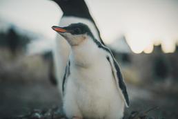 Antarktis-225.jpg
