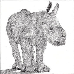 rhino_king