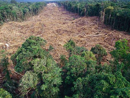 Desmatamento na Amazônia não é um problema em si.