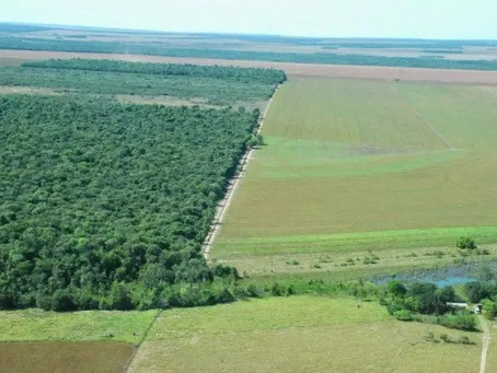 Área de Reserva Legal rural: expropriação estatal sem ressarcimento.