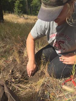 Soil Monitoring Hughes Crk
