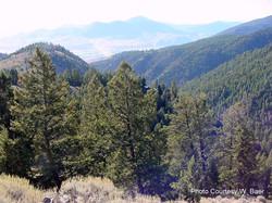 Jesse Creek Overview
