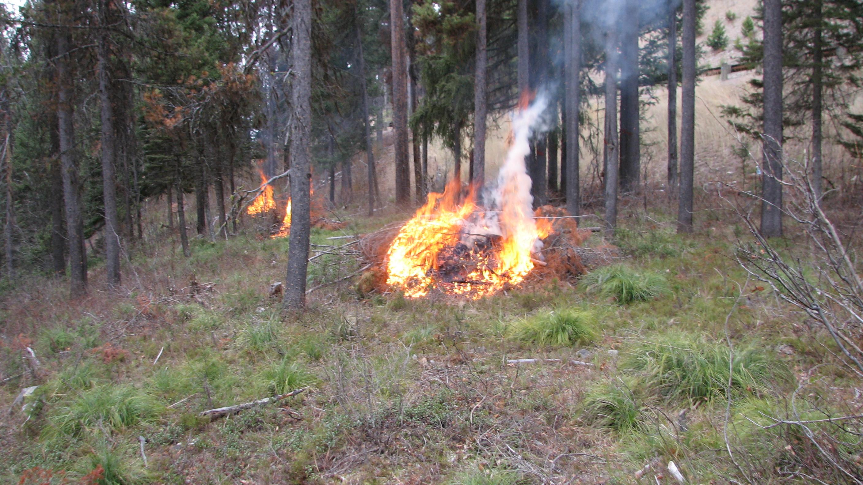 Fire wise 2011 006.JPG