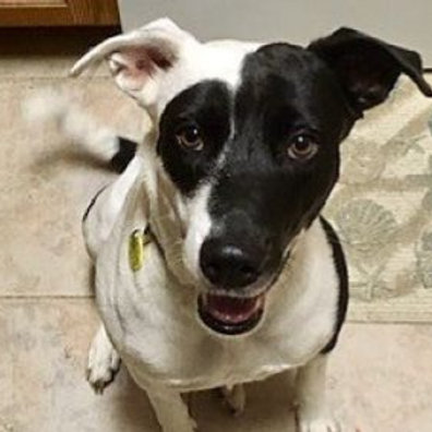 Kydden | Cattle Dog-Lab Mix | Adult