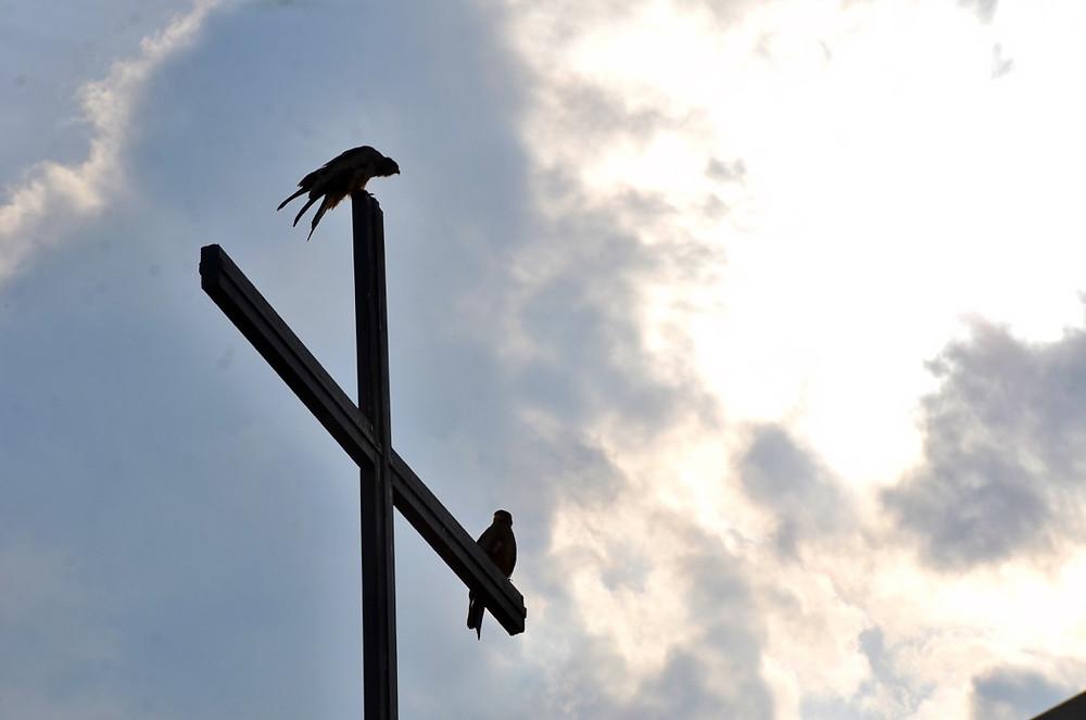 Les deux aigles nichant sur la colline du foyer