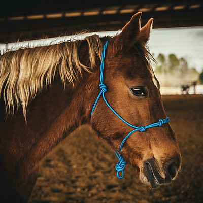 Holy Halters