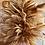Thumbnail: Pampas Grass Tree