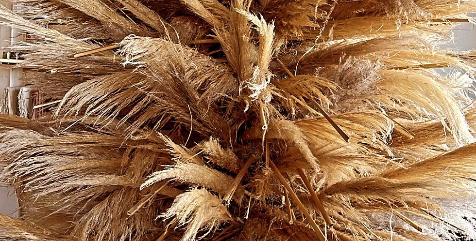 Pampas Grass Tree