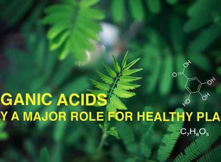 Organic Acids Play a Major Role for Healthy Plants