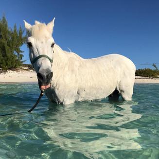 Dreamer, one of the original Provo Ponies