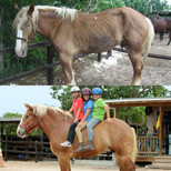 Turtle before and after he came to Provo Ponies