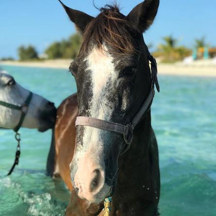 Rapido, one of the original Provo Ponies