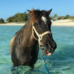 Limbo, one of the original Provo Ponies