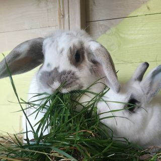 Foraging for your Rabbits