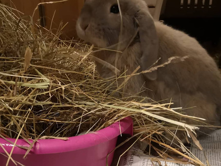 Rabbits – Why all the hype about hay?