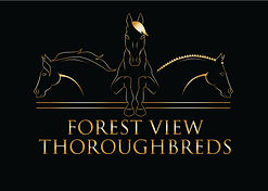 Off The Track Thoroughbreds