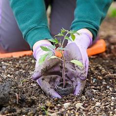 gardening - small plant closeup-April 06