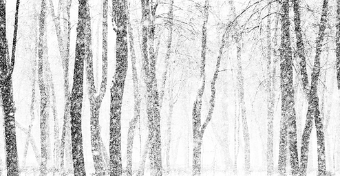 Snowy Trees Transparent_edited.png