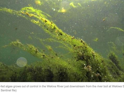 Florida's plan to save ailing springs including Wekiwa, Blue, Ichetucknee will fail, environment