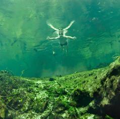 Algae in the Ichetucknee