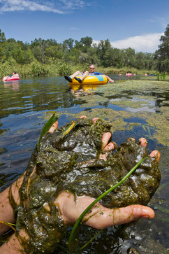 ichetucknee algae.jpg
