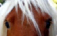 Portrait de cheval