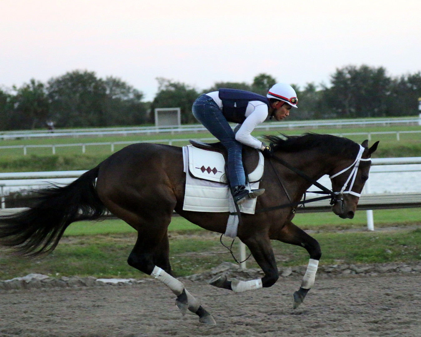 Rocky galloping at Palm Meadows