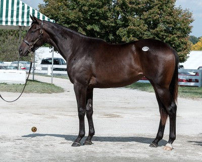 Nexus Partners with West Point Thoroughbreds