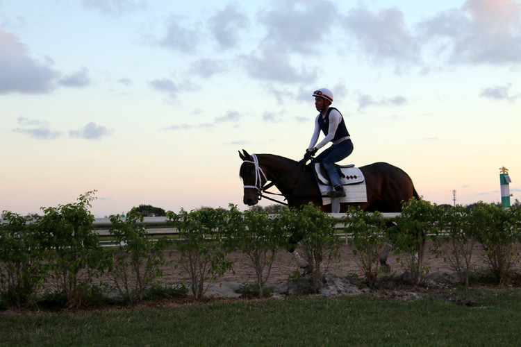 The Rock Says at Palm Meadows - March 2019