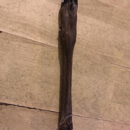 Deers Leg from