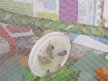 Barn owls' Butterflies
