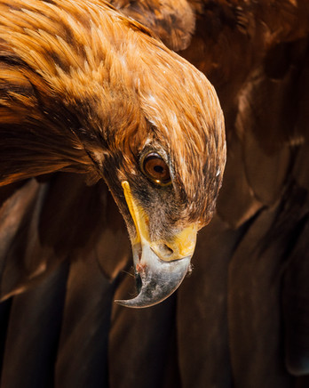 Mother Natures Finest: Part of the eagle hunter show in Bokonbayevo (Matt Horspool)