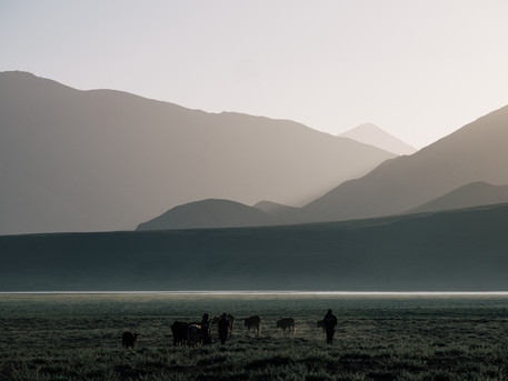 Morning Walks (Matt Horspool)