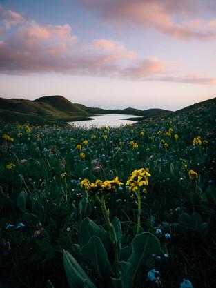 Fields of Colour (Matt Horspool)