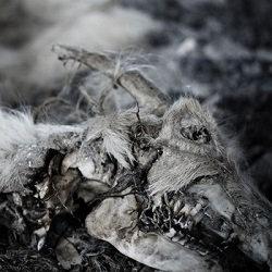 Aphonic Threnody - When Death Comes CD