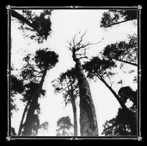 Ancestors Blood - When the Forest Calls MCD
