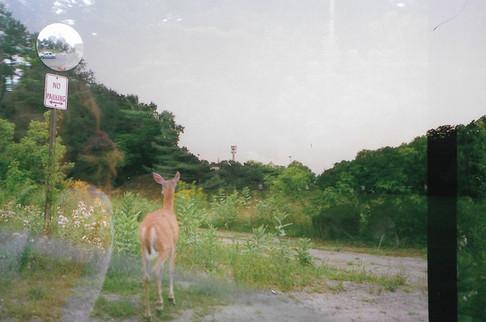 north country deer 02